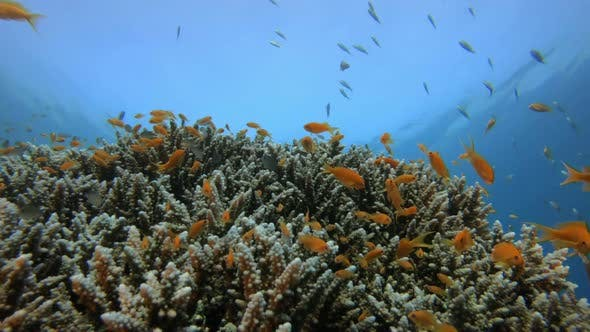 Thumbnail for Underwater Tropical Seascape
