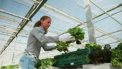 Female Farmer in a Greenhouse with Modern Technology