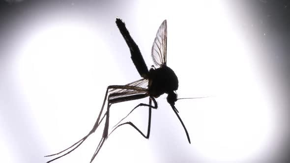 Thumbnail for Mosquito Analysis