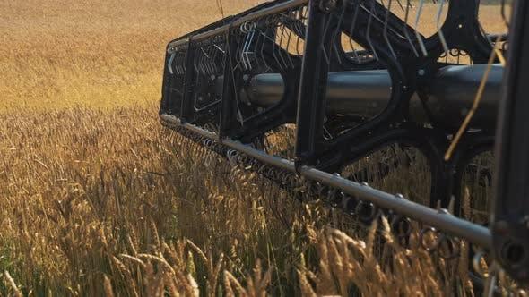 Combine Harvester Blades Threshing Wheat Field