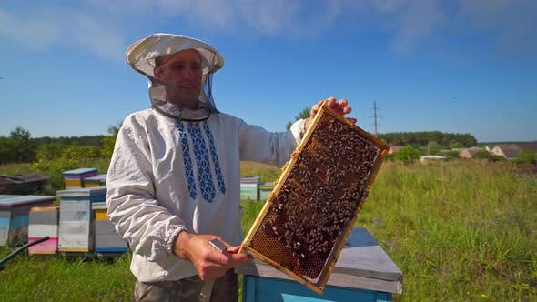 Thumbnail for Portrait of an apiarist with frame full of bees
