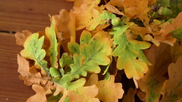 Thumbnail for Oak Leaves in Autumn Colors on Wooden Table 24