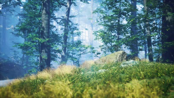 Green Grass in the Forest at Sunny Summer Morning
