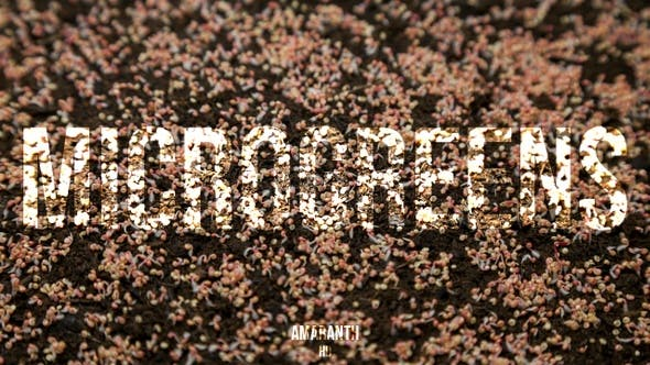 Thumbnail for Microgreens Amaranth 1