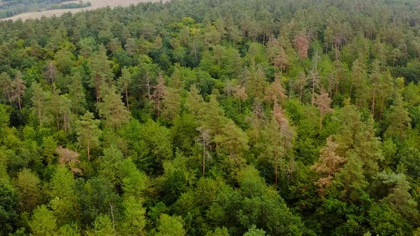 Thumbnail for Beautiful woodland