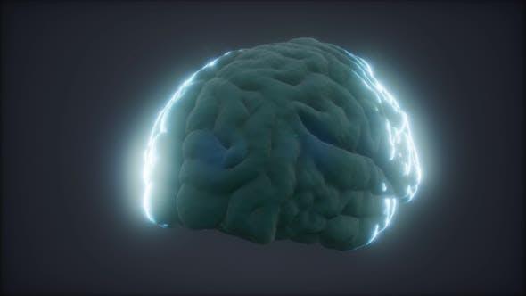 Thumbnail for Loop Rotating Human Brain Animation