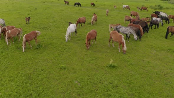 A Herd of Horses Graze in a Green Meadow Along the River