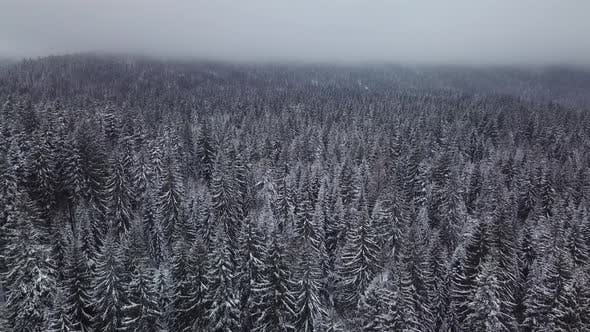 Thumbnail for Aerial Winter Footage. Flying Over Frozen Forest in Snowy Day.