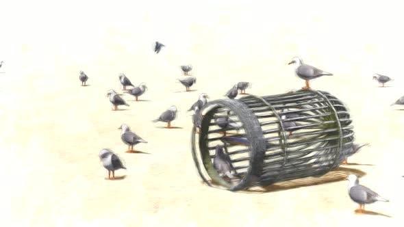 Free Seagulls Stop Motion