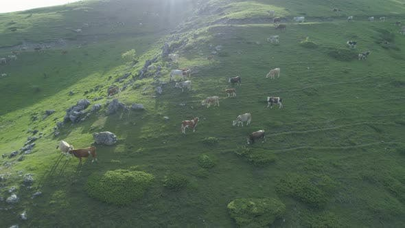 Mountain Landscape with Green Hills and Cow Pasture
