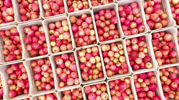 Aerial View of Boxes with Pomegranate Fruits