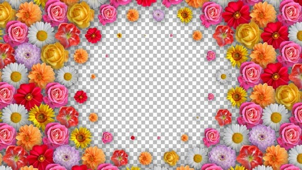 Flower Transitions Pack 5 Clips - Radial Transition