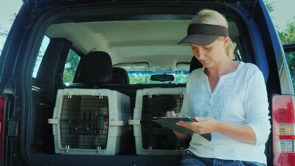 Thumbnail for A Woman Uses a Tablet, Stands at the Trunk of a Car Where There Are Cells with Puppies