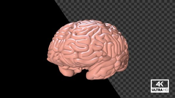 Human Brain Seamlessly Rotated With Alpha