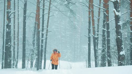 Slow Motion SloMo Active Young Caucasian Woman Skiing In Beautiful Winter Snowy Forest