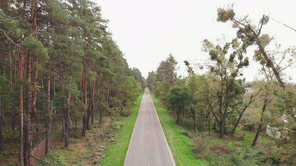 Thumbnail for Empty car asphalt road in green pine forest. Cyclist rides on road bike in forest