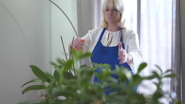 Confident Blond Caucasian Woman Woman Spraying Water on Domestic Plants and Smiling