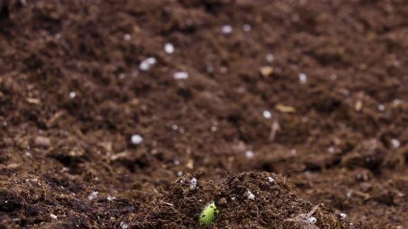 Thumbnail for Plant Grow