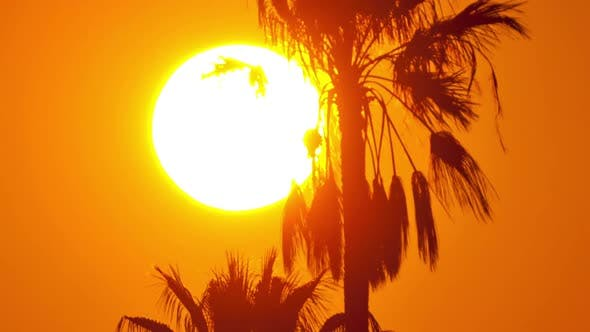 Thumbnail for Sunset Palm Tree Time Lapse