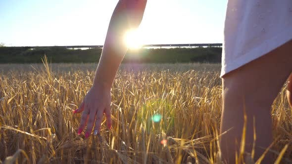 Thumbnail for Female Hand Touching a Golden Wheat in the Field. Arm of Girl Stroking Rye at the Meadow. Sun Flare