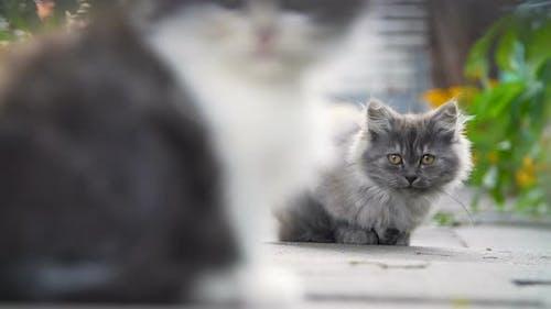 Kittens in the Backyard