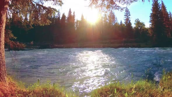 Thumbnail for Meadow at Mountain River Bank. Landscape with Green Grass, Pine Trees and Sun Rays. Movement on