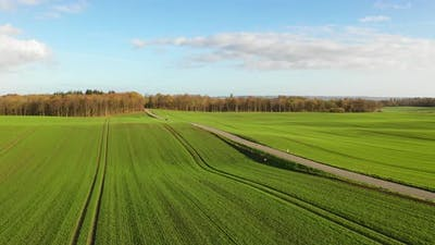 Green Fields in Denmark During Fall