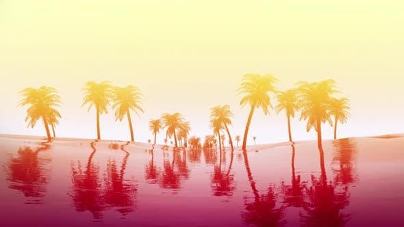 Thumbnail for Palm Tree Sunrise