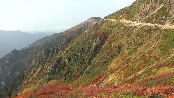 Thumbnail for Mixed Plants Vegetation on the Slope of the Valley in Autumn Colors