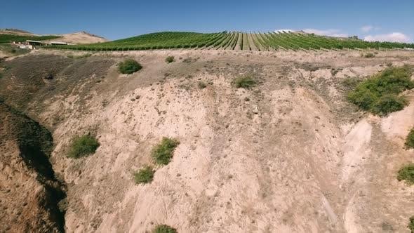 Weinberg auf Hügel