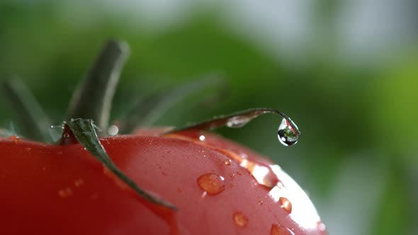 Thumbnail for Extreme close-up of water drip on tomato in slow motion; shot on Phantom Flex 4K at 1000 fps