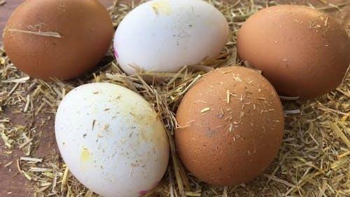Eggs Turning On Straw
