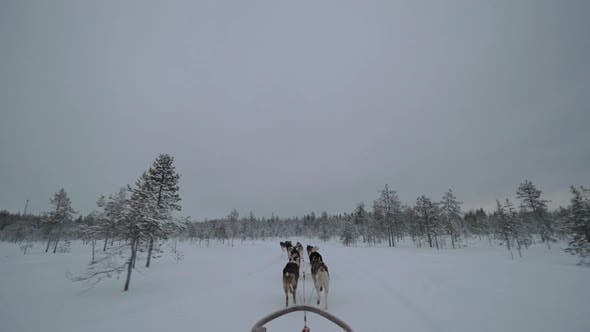 Thumbnail for Dogsled Running in Snowy Wood