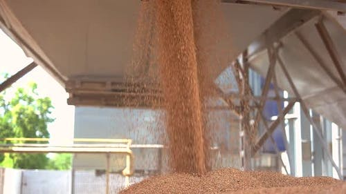 Grains Fall From a Container.