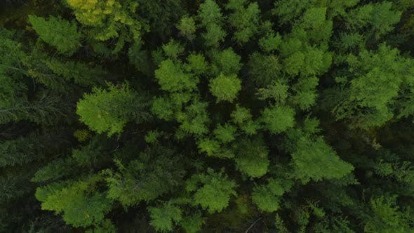 Thumbnail for Dramatic Aerial View Forest Landscape in Summertime Day  Wide Shot Slow Motion
