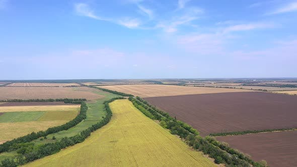 Thumbnail for Autumn agricultural fields from a bird's eye view