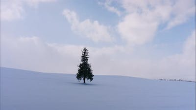Tree and Branch stand with snow in winter