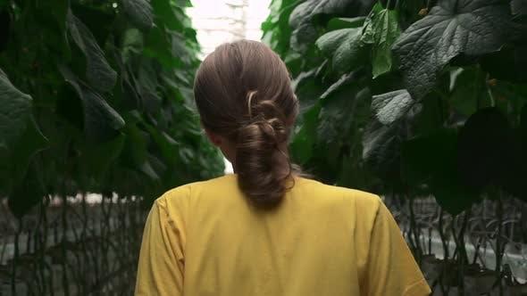Frau läuft während des Arbeitstages bei Agro Company Spbd im hydroponischen Gewächshaus