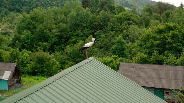 Thumbnail for Aerial Drone View Stork in the Roof V5