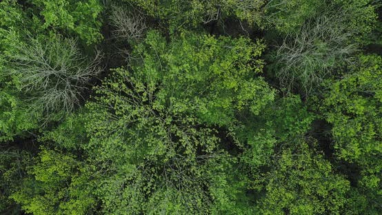 Thumbnail for Green Forest Drone View Trees
