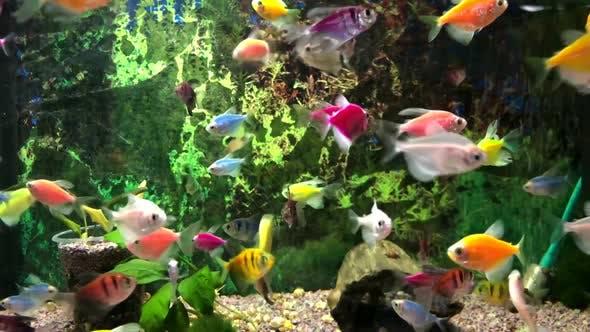 Lots of colored fish in the aquarium