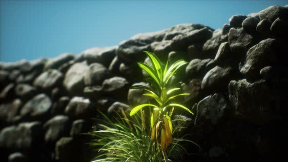 Thumbnail for Grass and Stone Wall in the North of England Countryside