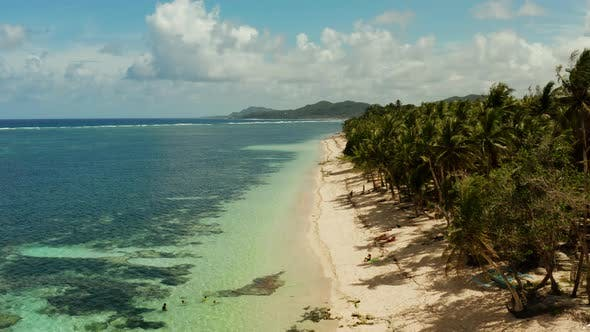 Thumbnail for Tropical Beach with Palm Trees, Aerial View