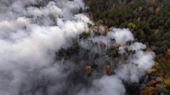 Thumbnail for Forest Fire, Dry Undergrowth with Burning Gray Smoke in the Air, Natural Disaster