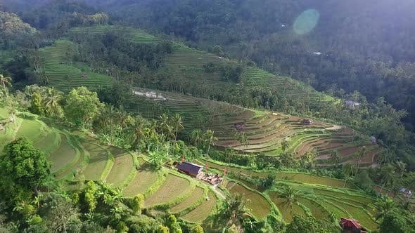 Thumbnail for Aerial Video Above Rice Terraces