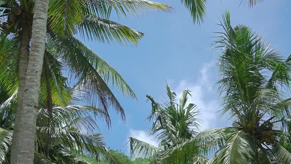 Thumbnail for Leaves of Palm Trees on the Background with Blue Sky
