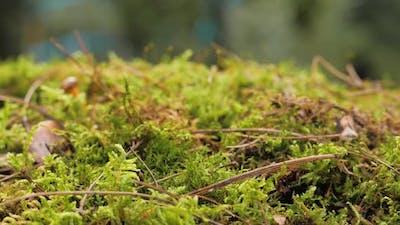 Moss Green Texture