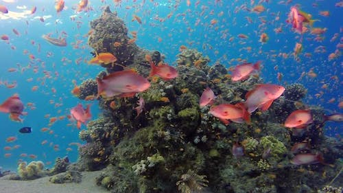 Beautiful Underwater Corals and Tropical Colorful Fishes