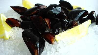 Falling mussels on the ice. Slow motion.