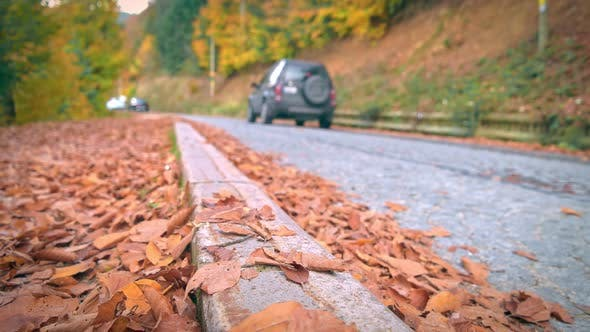 Cover Image for Autumn Road
